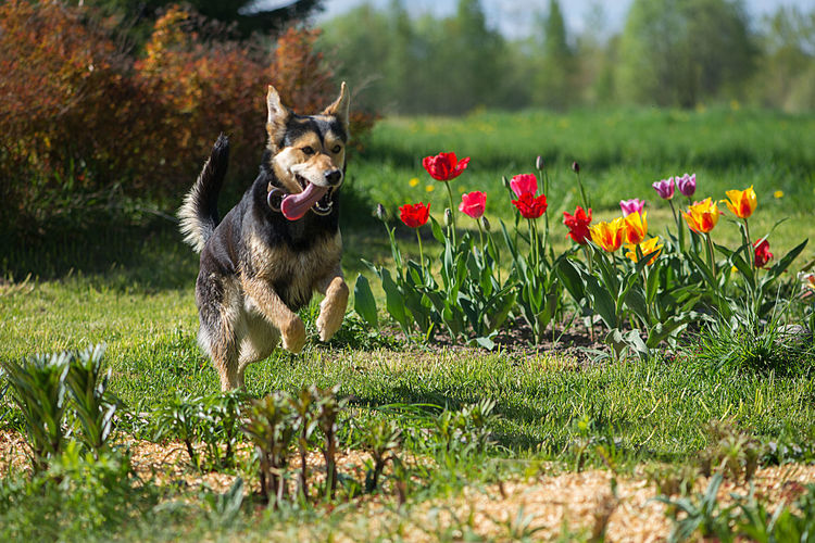 Dog running in the park