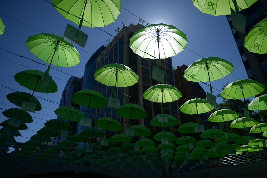 Umbrellas Low Angle View Protection Umbrella Sky No People Hanging Nature Security Large Group Of Objects Architecture Built Structure Outdoors Day Decoration Abundance Green Color Pattern Building Exterior Clear Sky
