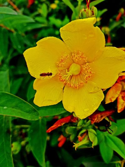 Flower Petal Nature Growth Yellow Plant Leaf Insect Flower Head Beauty In NatureCity One Animal Outdoors Animals In The Wild Freshness No People Day Fragility Close-up Green Color Animal Themes