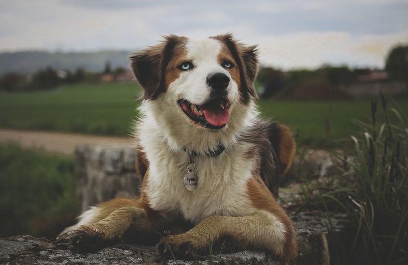 Portrait of dog sitting on retaining wall
