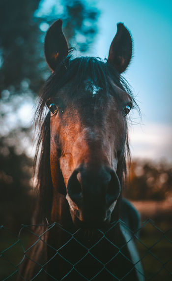 Close-Up Portrait Of Horse Standing At Ranch