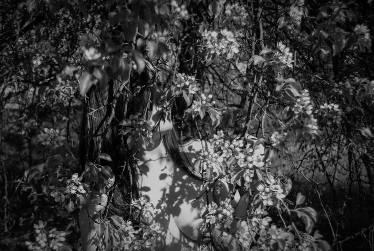Beauty In Nature Blossom Mood Lifestyle Blossom Portrait Spring Portrait Freshness Belarus Nature From My Point Of View By Ivan Maximov Atmosphere Our Best Pics Great Atmosphere Portrait Of A Woman My Freedom Nature Lover Eyeem Photo Springtime Blossom Time🌺 Monochrome Blossom Black And White Spring Monochrome Portrait In The Forest Portrait Spring Nature