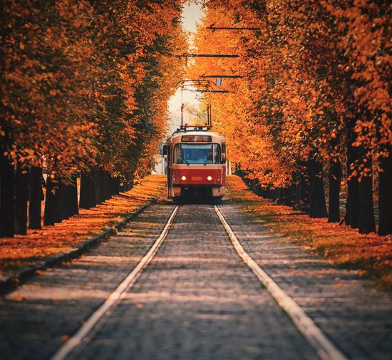 Tram in Prague Tram Prague City Chill Chillout EyeEm Best Shots EyeEm Nature Lover EyeEm Gallery Transportation Transport Taking Photos Check This Out Autumn Tree Change Outdoors Leaf Transportation The Way Forward Nature Forest No People Day Sky The Traveler - 2018 EyeEm Awards