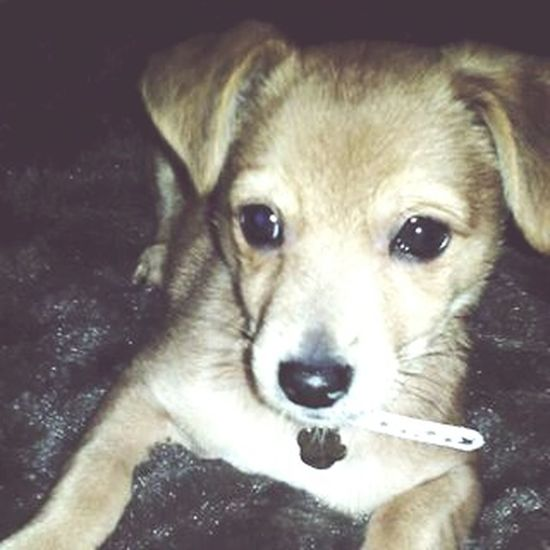 My Dog <3 Animal Love Abi