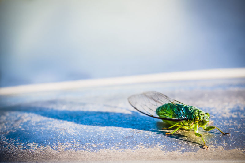 Close-up of cicada outdoors