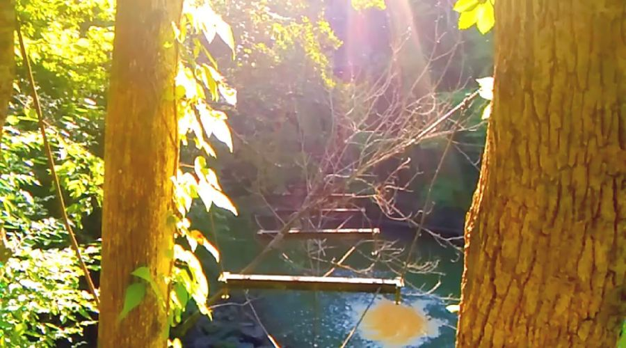 07/16 Tree Growth Forest Tree Trunk Tranquility Plant Close-up Nature Tranquil Scene Day Branch Sunbeam Non-urban Scene Scenics Outdoors Beauty In Nature WoodLand Green Color Green Focus On Foreground Waterfall Bridge Popular Travel Check This Out