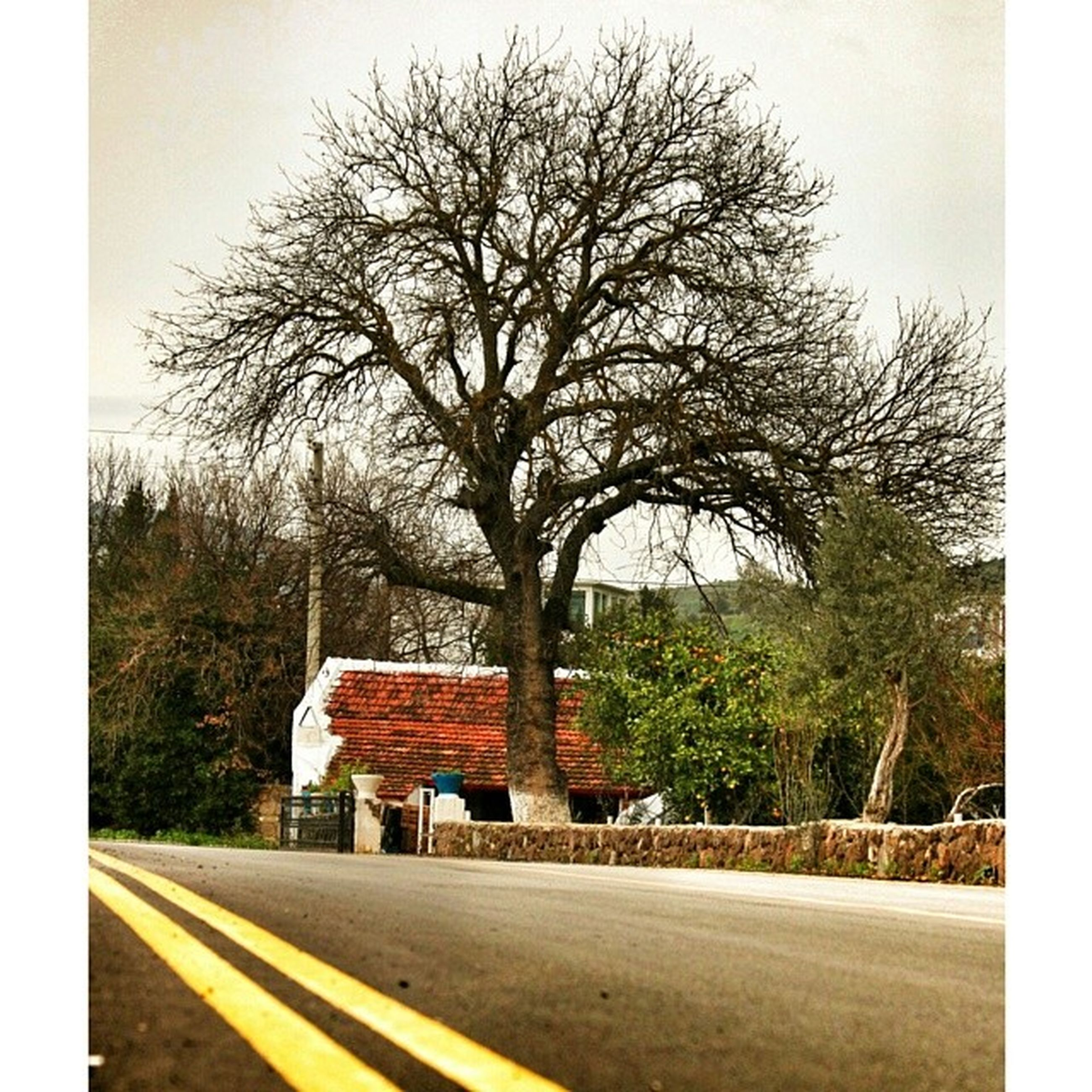 tree, road, bare tree, architecture, building exterior, transportation, built structure, transfer print, street, the way forward, sky, auto post production filter, road marking, branch, house, day, no people, outdoors, nature, tree trunk