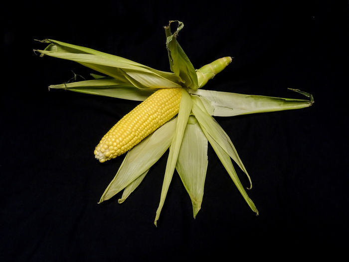 Black Background Close-up Corn Cropped Farming Food Food And Drink Freshness Healthy Eating Maize Nature No People Produce Studio Shot Yellow