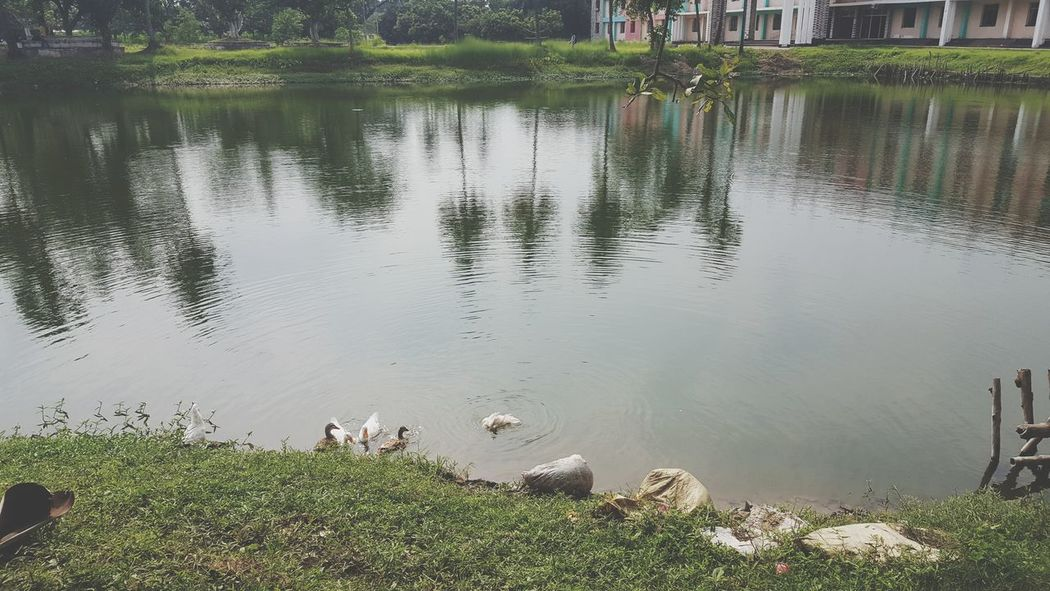 Photography.. nature. Green. Pond . Swam.. college.. nature... love... click... single.