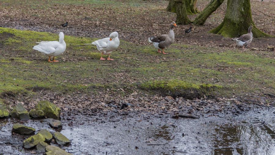 Birds perching on grass