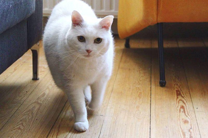 International catday! Cat InternationalCatDay Australie Aussiehockeyadventure Love ♥ Antwerpen Tamworth