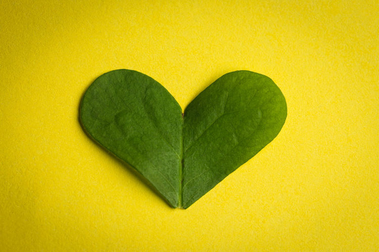 Close-up of heart shape leaf on yellow background