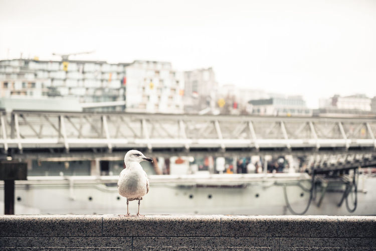 London Animal Animal Themes Architecture Bird City Focus On Foreground No People One Animal Outdoors Seagull Adventures In The City