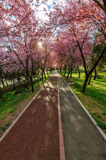 Spring Pink Sunny Day Bicycle Road Nature Outdoor Warm Weather Tree Flower Branch Road Springtime Diminishing Perspective Blossom Sky Cherry Blossom Cherry Tree Blooming Pathway vanishing point Flower Tree In Bloom Empty Road Walkway