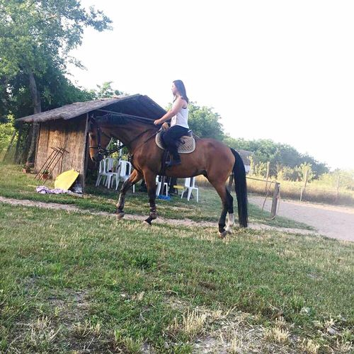 Lazy day with my HERO ❤️ | My Hero Competition Champion Sporthorse Horse I Love My Horse