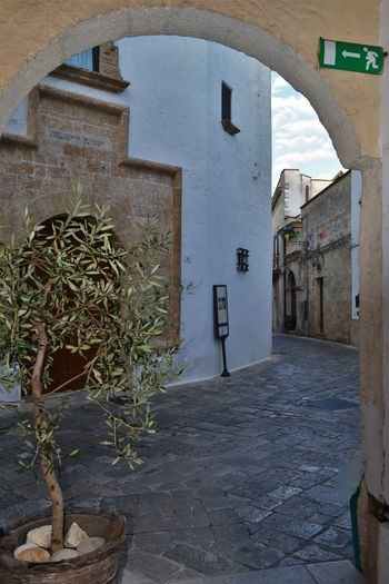 Architecture Architettura Basalto Building Building Exterior Built Structure Day Footpath Long Narrow No People Outdoors Pietraleccese Potted Plant Prospettiva Puglia Salento Street Streetphotography The Way Forward Ulivo Verticale