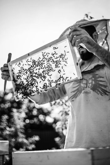 APIculture Agriculture Freedom HoneyBee Nature Propolis Work B&w Bee Beekeeper Beekeeping Black And White Cluster Colony Frame Garden Golden Hour Healthy Honey Organic Outdoors Pollen Portrait Wax Young Adult
