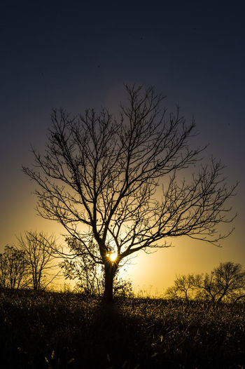 Leafless tree at sunset Bare Tree Beauty Beauty In Nature Branch Idyllic Landscape Nature No People Outdoors Rural Scene Scenics Silhouette Sky Sun Sunset Tranquil Scene Tree