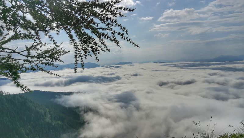 Horizon Over Clouds Tranquil Scene Tree Mountain Fog Rural Scene Forest Beauty Blue