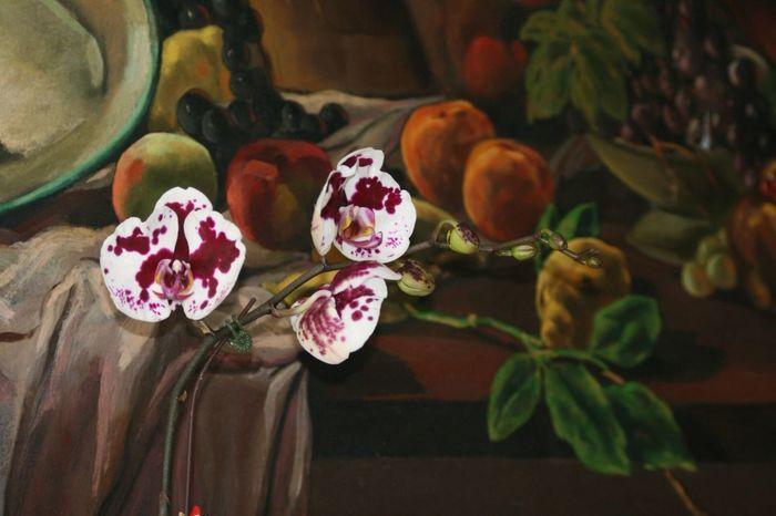 Phalaenopsis Art Flowers Beautiful Bodegón óleo