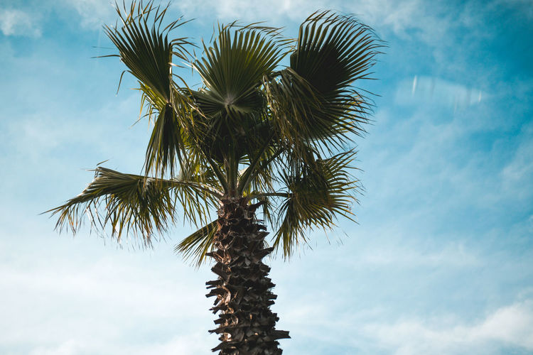 Palmtrees Palm Tree Tropical Climate Sky Tree Low Angle View Cloud - Sky Plant Growth No People Nature Day Beauty In Nature Tree Trunk Trunk Tranquility Leaf Palm Leaf Outdoors Coconut Palm Tree Tropical Tree Palm Tree Palmtree Nature Summer Summertime Blue Sky