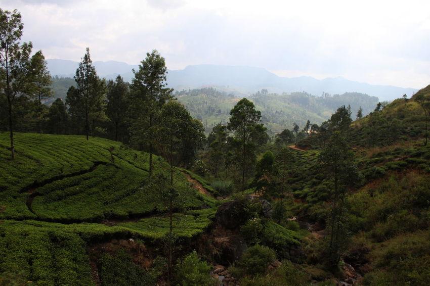 Cloud - Sky Day From The Train Green Hill Landscape Mountain Range No People Non-urban Scene Outdoors Remote Rural Scene Sri Lanka Tree Valley