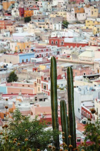 city on the hill City Cactus Colors Mexico Cityscape Architecture Building Exterior No People Built Structure City High Angle View Residential Building Outdoors Town Day Nature Tree This Is Latin America