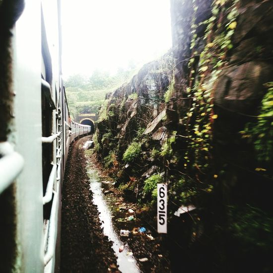 Window Tree Nature Konkan Railways Konkan Railway Konkandiaries Tunnel View Letv Le 1s Camera Indianrailways Green Color Beauty In Nature Scenics