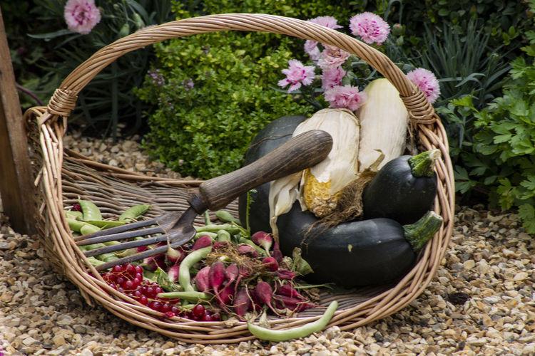 View of flowering plants in basket