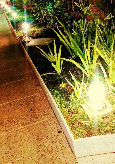 Mais cor por favor 🖖🏿 Fotografia Illuminated Foco