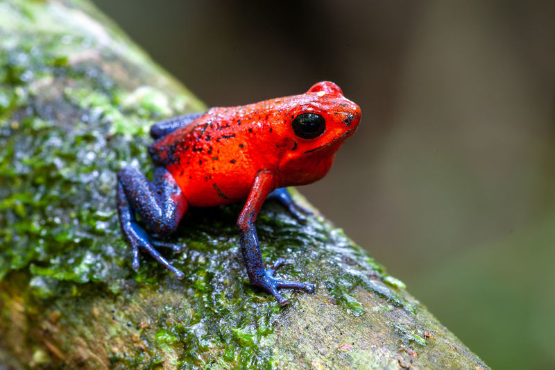 Close-up of ladybug