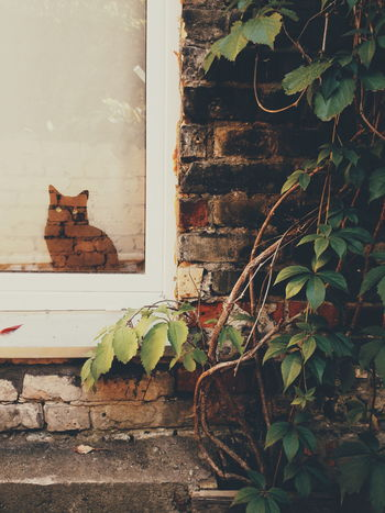 Window Leaf Plant No People Day Cat Reflection Tricky View Tricky Pic No Photoshop Interesting Pictures Vilnius, Lithuania Vscocam Adventure Window EyeEmNewHere
