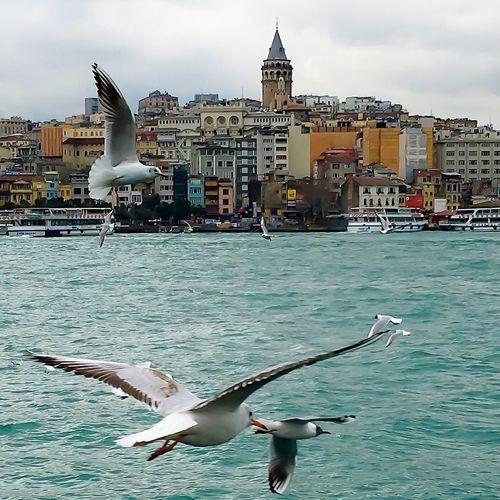 Galata All_shots Allshotsturkey Istanbul Turkey Istanbuldayasam Istanbul - Bosphorus Istanbullovers Follower Followback Following Followme Likeforlike Like Likes Likeforlike #likemyphoto #qlikemyphotos #like4like #likemypic #likeback #ilikeback #10likes #50likes #100likes #20likes #likere