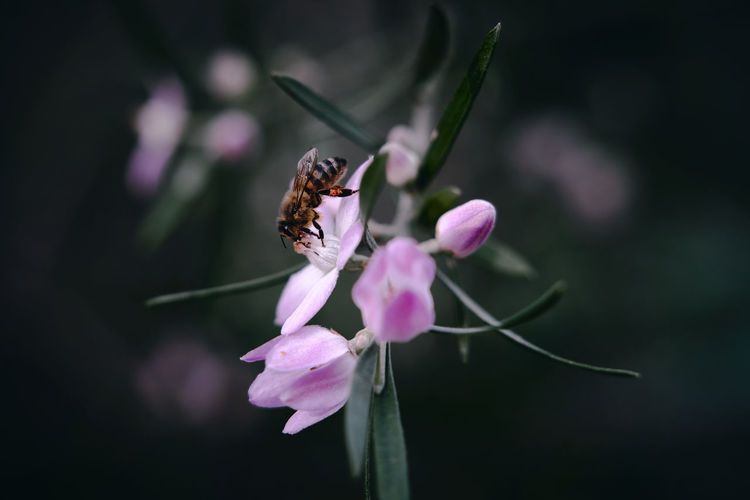 Close-up of insect on pink flower
