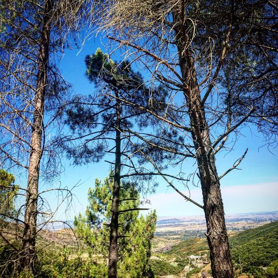 Intothewoods Trhees Countryside Tallest Roadto Mediterranean