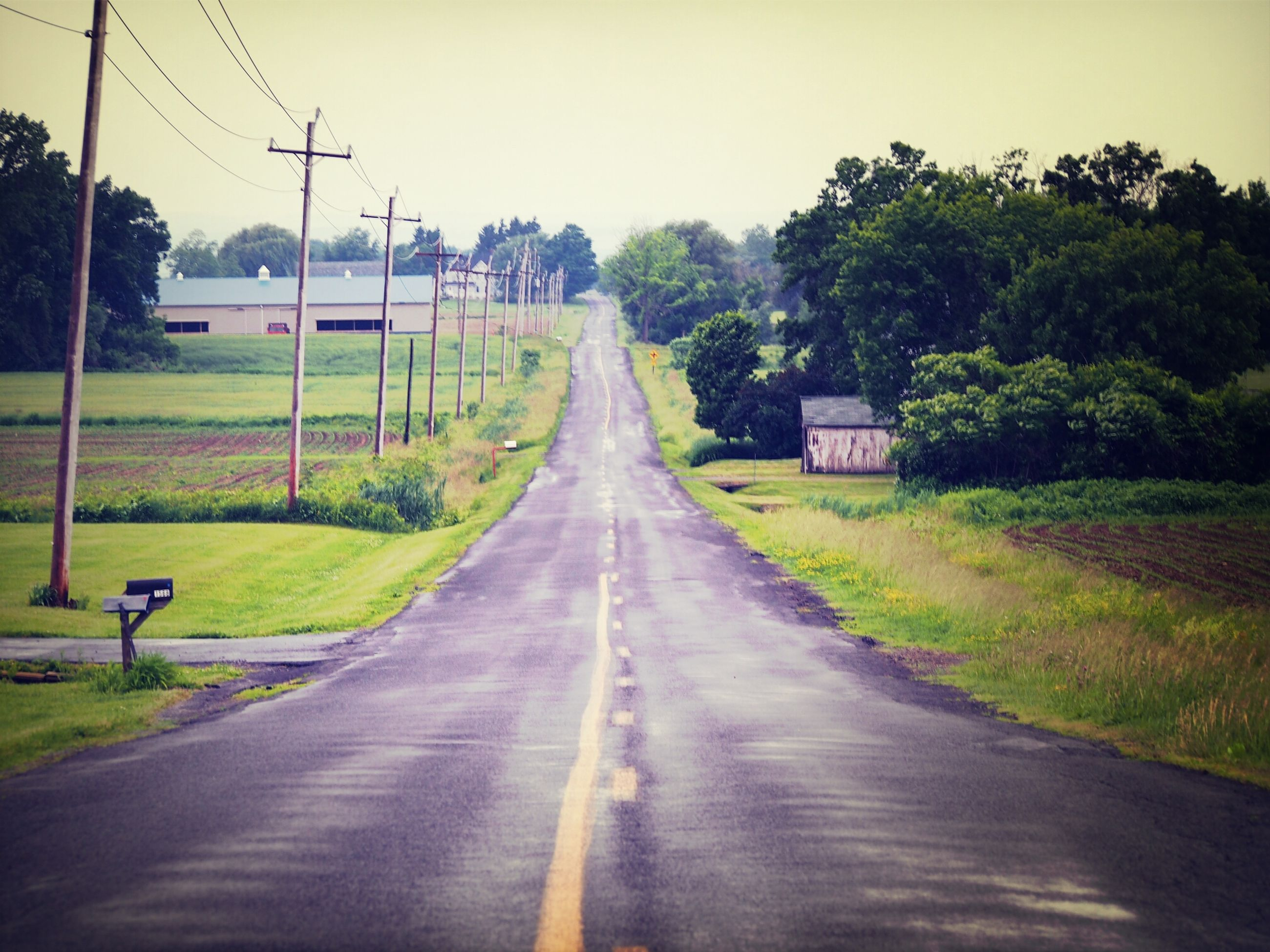 the way forward, diminishing perspective, transportation, vanishing point, road, country road, grass, tree, landscape, field, clear sky, electricity pylon, long, sky, road marking, green color, dirt road, tranquility, nature, empty road
