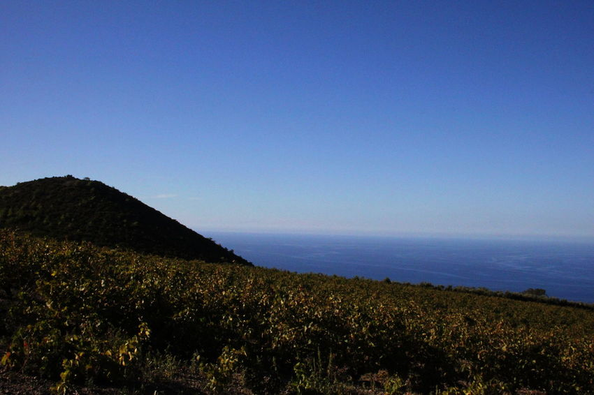 Pantelleria Beauty In Nature Blue Clear Sky Day Grapeyard Horizon Over Water Landscape Mountain Nature No People October 2015 Outdoors Scenics Tranquil Scene Water