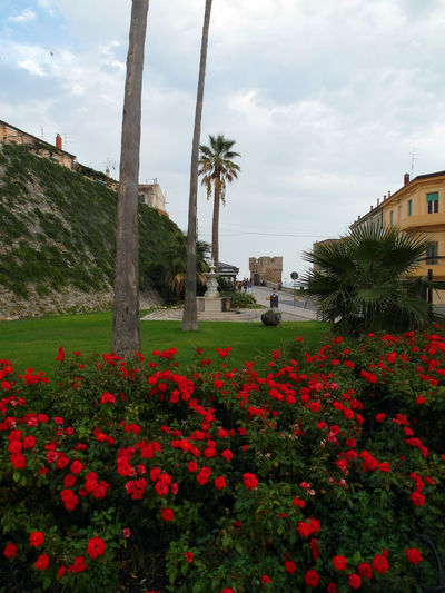 Flowerbed with red flowers Termoli  Architecture Beauty In Nature Blooming Building Exterior Built Structure Cloud - Sky Flower Flower Head Flowerbed Decorations Fragility Freshness Grass Growth Italy Molise Nature Outdoors Palm Tree Plant Red Red Flower Scenics Travel Destination Tree
