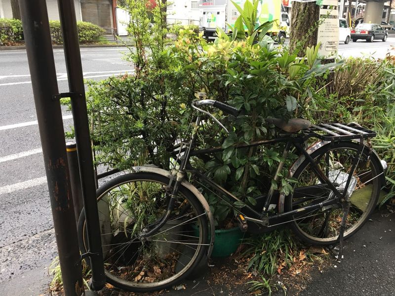 Abandoned Bicycle No Hope Homeless Lost Japan