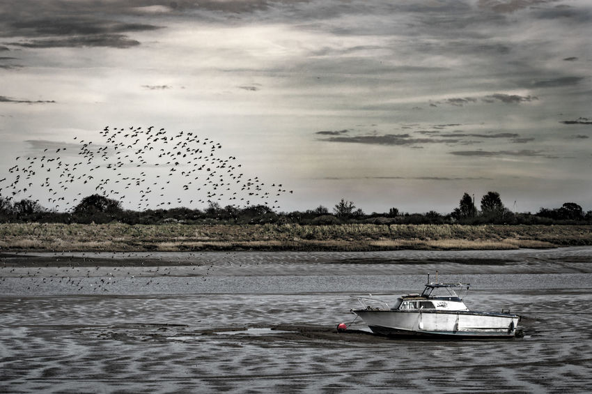 Flock Of Birds Boat Boat On The Water River By The River Riverside River View On The River Boat On The River White Boat Dramatic Sky Blackwater Maldon Essex United Kingdom Nikon D3200