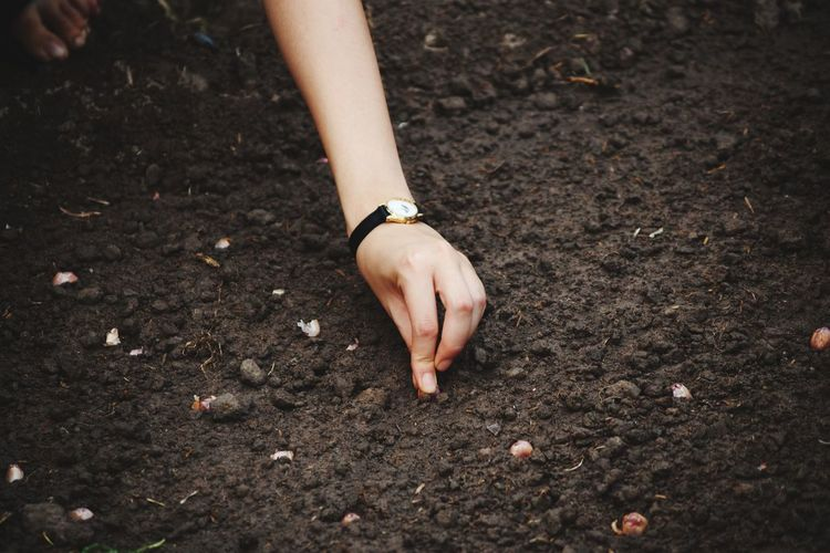 Cropped Hand Of Woman Putting Seeds On Field