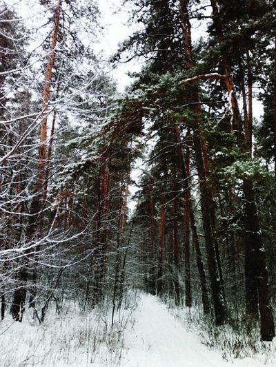 Winter Ski Snow ❄ Walking Around My Photo Enjoying Life Nature Urban Nature Hollidays