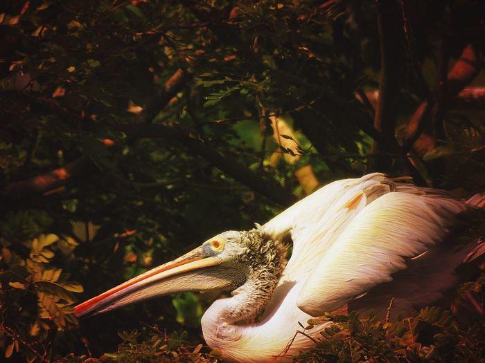 Pelican on field by plants