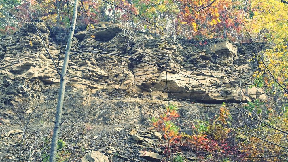 Fall Time Nature Cliffside Fall Leaves