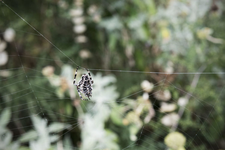 Close-up of butterfly on spider web