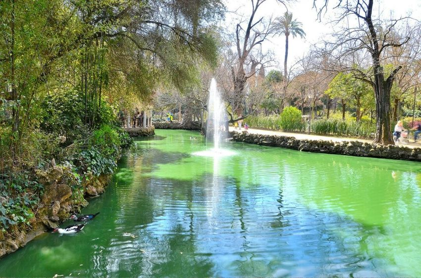 Water Tree Nature Beauty In Nature Green Color Outdoors Tranquility Parque De Maria Luisa Seville Sevilla