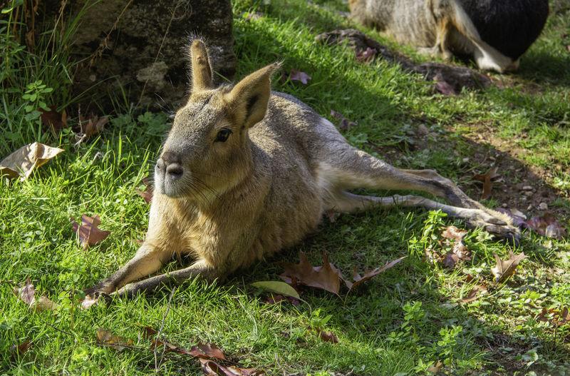 Animal Wildlife Outdoors Sunlight Mammal Animal Vertebrate Land