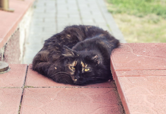 Animal Animal Themes Belarus Cat Cute Domestic Animals Lida Lying Down No People Pets Relaxation Resting Selective Focus