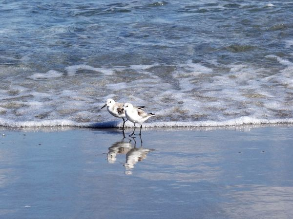 Two Birds Shore Animal Themes Water Waterfront Bird Outdoors Nature Sea Beauty In Nature Day Beach Birds No People Animals In The Wild