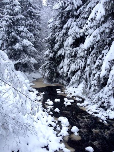Snow blanketed creek Thorne Bay, Alaska Snow Winter Tranquil Scene Water Beauty In Nature Stream Southeast Alaska Prince Of Wales Island Thorne Bay